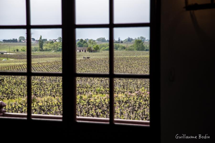 From the windows of Château Pontet-Canet.