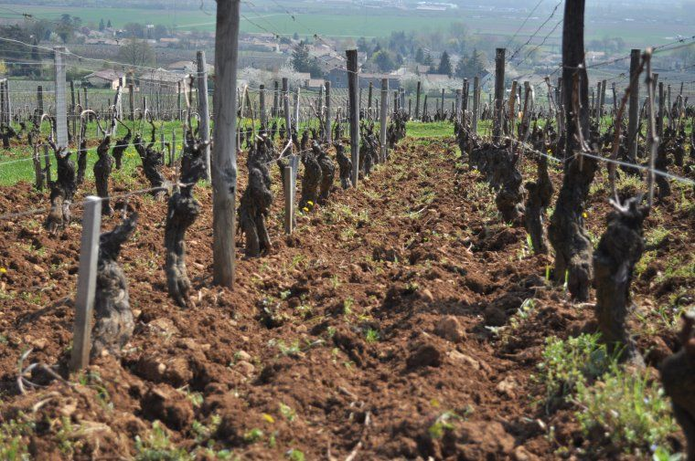laclefdesterroirs-agriculture-03