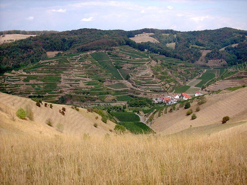 The vineyard on igneous rocks in Kaiserstuhl, Germany